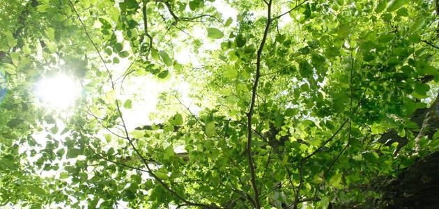 出資者の記名の木